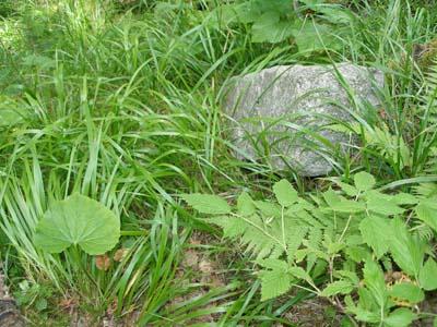 Приэльбрусье весной, 2006